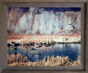 Canadian Geese On Lake Mcgraw Wildlife Birds Wall Art Decor Framed Picture