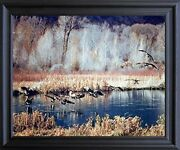 Canadian Geese On Lake Mcgraw Wildlife Birds Art Print Black Framed Picture