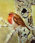High Quality Oil Painting Robin On Lichen 24x20