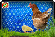 Poultry Netting 50and039 Duck Pen Chickens Aviary Quail Net Protective Garden Nets