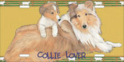 Collie License Plate