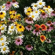 Perennial Wild Flower Seed Mix - Grows Up To 36-40 Inches In Height 1 Lb