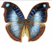South American Blue Butterfly - A Bcb Puzzles Wooden Jigsaw