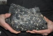 Rare Chinese Nickel Iron Meteorite Iron Carved Coin Casting Mould Pattern Statue