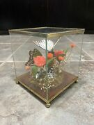 Vintage Real Butterfly Display Taxidermy Mixed Mounted Butterflies Glass Box