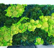 Moss Wall Art In Custom Size 4ft X 6ft On Picture