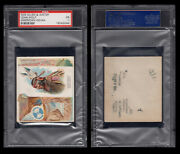 1888 N36 Allen And Ginter American Indian Chiefs Lean Wolf Psa 1  / 4002