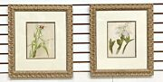 Pair Framed Matted Antique Orchid Prints Hand Coloured London 1895 The Garden