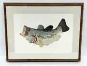 Lunker Largemouth Bass Larry Crawford Signed And Framed Fish Fishing Art Etching