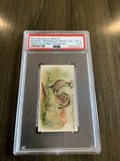 1891 N20 Allen And Ginter Prize And Game Chickens Silver Spangled Polish Psa 4.5