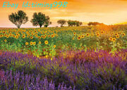 Educa Sunflower Lavender Field Scenery 1500 Adult Stress Relief Puzzle Toys New