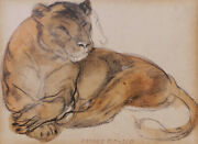 Camille Roche French Drawing Art Dandeacuteco Animal Lion Lioness Tan Oil Painting