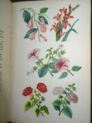 1871 Beetons Book Of Garden Management 12 Colour Plts 32 B/w Plts Rose Beeton