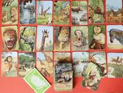Pepys 1955 Jungle Thrills Boxed Card Game Racey Helps With Instructions