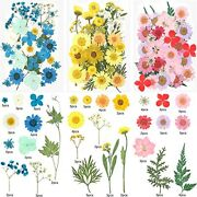 Dried Pressed Flowers For Resin Small Real Pressed Flowers Assorted Colors 2