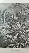Green Monkeys Stealing Corn Authentic 19th Century 1885 Lithograph Print Specht