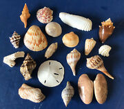 Lot Of 19 Assorted Unique Seashells Hand Picked, Washed And Polished From Sanibel