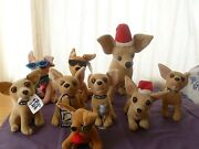 5 Taco Bell Chihuahua's And 5 Other Chihuahua's