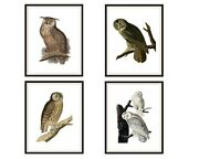 Set Of 4 Vintage Art Print Poster Reproductions Owls Unframed W/size Options