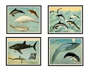 Set Of 4 Vintage Botanical Art Print Poster Reproductions Whales And Giant Fish