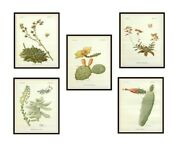 Set Of 5 Vintage Botanical Art Print Poster Reproductions Cactus And Succulents