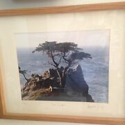 Lone Cypress Original Photograph, Matted And Framed 1988