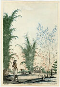 Very Rare Antique Print-natural History-bamboo-india-solvyns-1808-1812