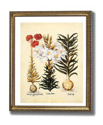 French Victorian Flower Lilies Contemporary Wall Picture Gold Framed Art Print