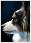 95201 Pack Of 4 Papillon Puppy Dog Stationery Decor Laminated Poster Us