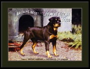 94255 English Rottweiler Dog Dogs Puppy Puppies Decor Laminated Poster Ca