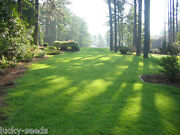 Zenith Zoysia Grass Seed 100 Pure 5 Lbs. 5000 Sq.ft Coverage