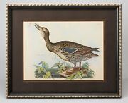 Wild Duck Hand-colored Antique Engraving By Prodeaux Shelby Circa 1821-1834