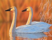 Original Tundra Swan Painting 3rd Place 2020 Michigan Duck Stamp Contest