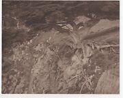 Large 1920s Art Photo Of Cypress Tree On Cliff At Monterey Ca