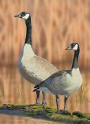 Original Canada Geese 2nd Place 2020 Oregon Duck Stamp Contest Entry