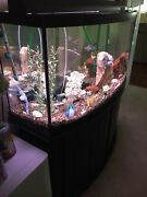 72 Gallon All-glass Bow Front Aquarium. Used Stand, Light, Top, Filter, Heater