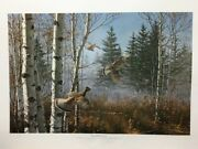 David Maass Thundering Out Ruffed Grouse Signed And Numbered Art Print
