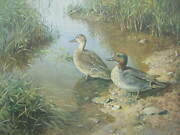 William Hollywood Green-winged Teal Duck Signed Limited Edition Art Print