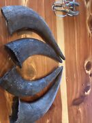 Authentic Buffalo/bison Horn Caps. Big Crafts Decoration Or Gift 4 Of Them