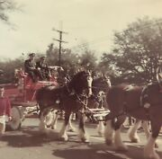 Mardi Gras Parade 1969 Budweiser Clydesdales Photograph Picture