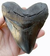 5.5 Inch Black Megalodon Shark Tooth Replica 126 Carcharocles Megalodon