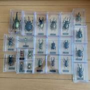 De Agostini Insect Specimen Set Of 22 Figures From Around The World Magazine