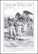 1911 China Capturing Eagles With Decoys Mongolia Feathers Used For Fans 120