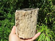 Blue Forest Petrified Wood Collectible Fossil Specimen Decor Wyoming 5.9lb 4dia