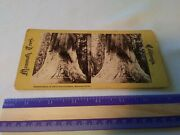 Rare Old Antique Stereoview Card Mammoth Trees California