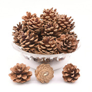 Natural Pine Cone Real Genuine Xmas Tree Hanging Decorations Festive Christmas