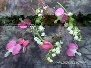 Swans Dicentra Lily Of The Valley Coral Bell Leaves Forever In My Heart Print