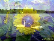 Swans Swan Sunflowers Flowers Flower 8.5 X 11 Hand Signed By Artist Print