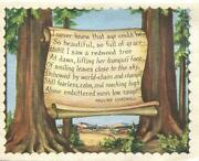 Vintage Sycamore Trees Valley Hills Lithograph Motto Dawn Sky Valley Rare Card