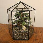 Vintage Wrought Iron And Glass Hexagon Terrarium W/ Artificial Tree Philippines
